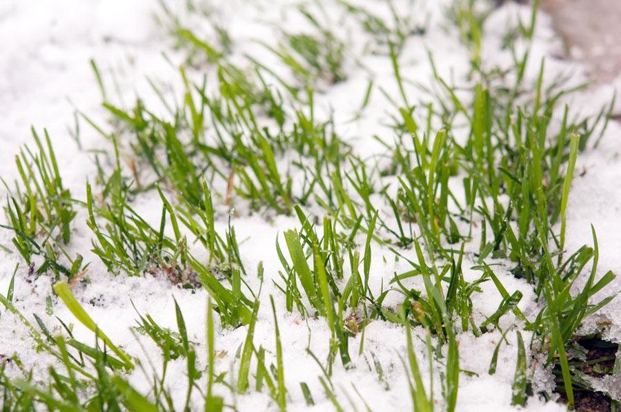 my040-it_is_snowing